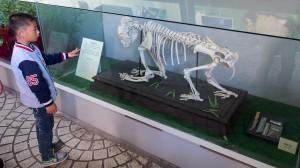 Panda Skeleton
