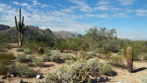 White Tank cacti