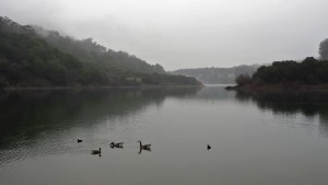 Lake Chabot with Geese