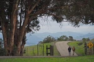 Leprechuans on Fairmont Ridge
