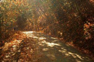 Lake Chabot Fall Colors